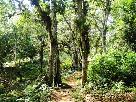 Túra tropickou džunglí vpohoří Sierra del Escambray