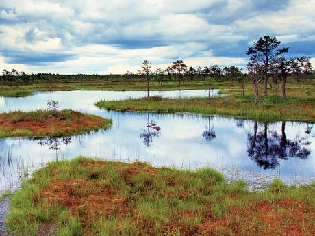 Rozsáhlá rašeliniště vnárodním parku Lahemaa