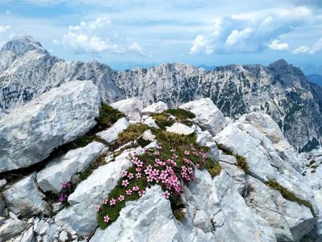 Julské Alpy jsou rájem skalniček