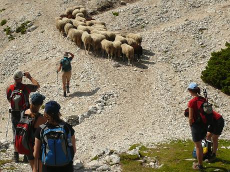 Setkání se stádem ovcí na túře k sedlu Vršič