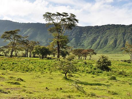 Pohled na travnatou stěnu kráteru Ngorongoro